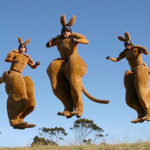 Roo's kangaroo stilt performers jumping